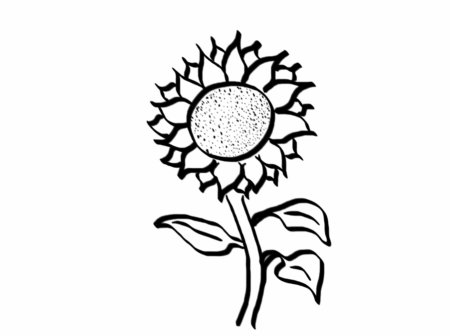 Line Drawing Ideas Ks : Jeannelking how to draw a good enough sunflower